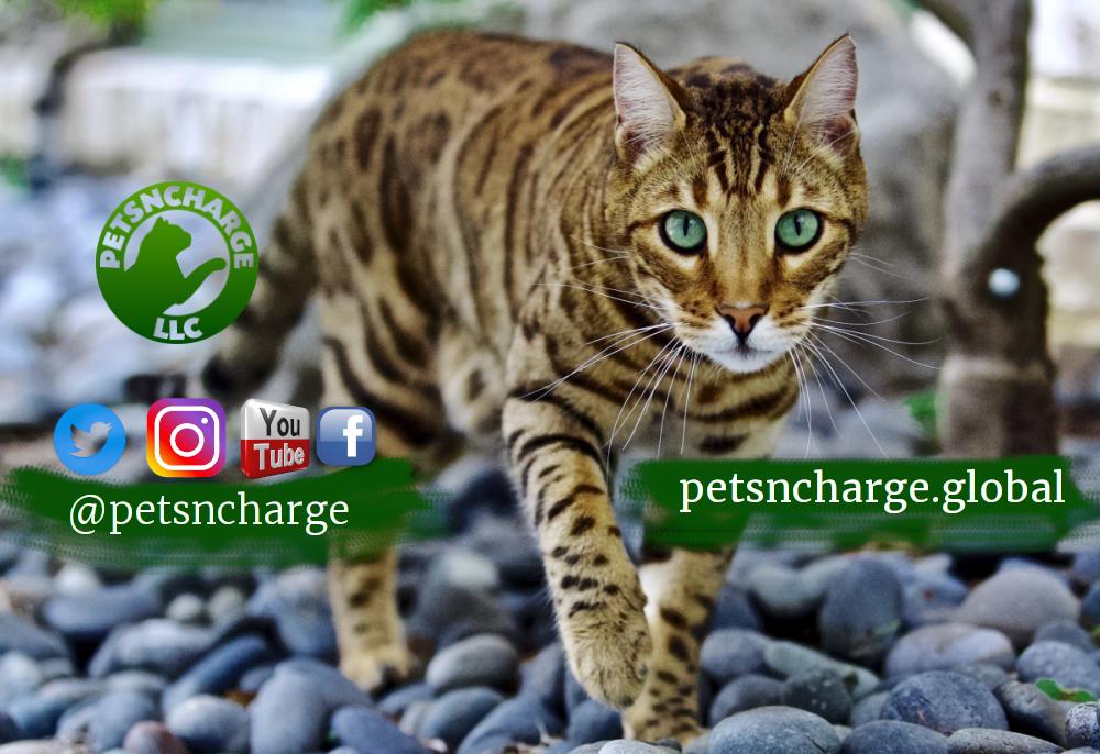Petscharge